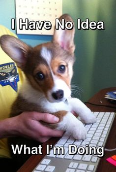 I say all the time that the puppies at work should do our work for us...