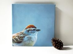 Sparrow Bird photo on canvas 8x8 fine art photography gallery wrap aqua blue rustic modern home decor ready to hang FREE US shipping, $75.00 by KneeDeepOriginals