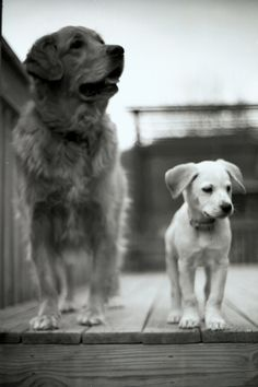 Big dog, little dog.