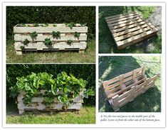 It is the season to start growing strawberries at home here. Our local gardening supply stores like home depot have many strawberry plants and pots for sale. If you would like some DIY projects for growing strawberries, this cool pallet strawberry planter project might be for you. What I like …