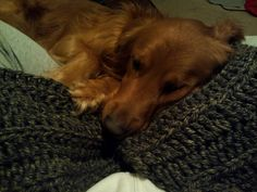 Granite scarf project...puppy approved...