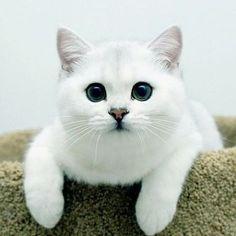 Very beautiful cat 3 photo