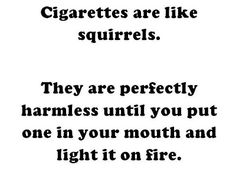 They are just like squirrels when you think about it.