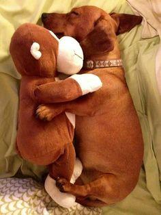 Para que se duerma el cachorrito de la casa =) muy tierno♥