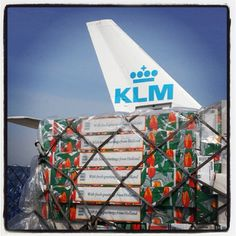 Dutch, fresh tulips being loaded into the cargo hold. Did you know KLM has her own tulip, the KLM Tulipa.