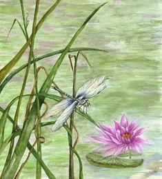 Andělský deník: Zvířátka a příroda