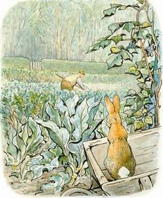 Peter Rabbit. He went back towards the tool-shed, but suddenly, quite close to him, he heard the noise of a hoe-scr-r-ritch, scratch, scratch, scritch. Peter scuttered underneath the bushes. But presently, as nothing happened, he came out, and climbed upon a wheelbarrow and peeped over. The first thing he saw was Mr. McGregor hoeing onions. His back was turned towards Peter, and beyond him was the gate!