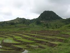 Terraced rice near Luro village, Luro subdistrict, Lautem, Timor-Leste (5 Mar 2004)