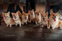 """We'll Take Seven B'Day Cakes to Go, Please!"" 
