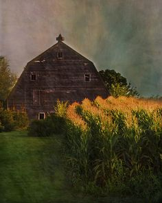 barn and cornfield were big parts of my growing up years Farm Barn, Old Farm, Country Barns, Country Life, Country Living, Country Roads, Cabana, Barns Sheds, Country Scenes