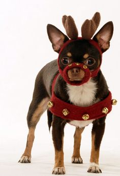 pets dressed up for christmas | Santa Pets - Great Pictures of Pets Dressed Up for Christmas | Pet ...