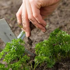 Organic Weed Control with Jean-Martin Fortier - Organic Gardening - MOTHER EARTH NEWS