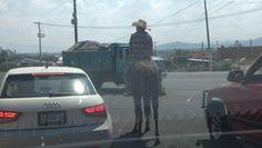 Un jinete con su caballo respetando el alto y en su carril en los cruces de las avenidas Tesistán y Ángel Leaño en el municipio de Zapopan. Reportero Ciudadano: Anónimo