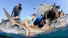 Gronk tags a tiger shark for 'Shark Week' New England Patriots Schedule, Rob Gronkowski, Shark Week, Nfl, Husband, Tags, Nfl Football, Mailing Labels
