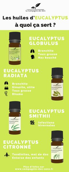 In addition to being the almost exclusive food of koalas (and between us all … Esential Oils, Natural Cosmetics, Better Life, Healthy Tips, Diy Beauty, Home Remedies, Natural Health, Herbalism, Detox