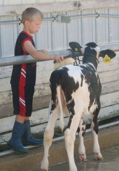 Treyton Hildebrandt helps wash his calf before the Little Britches showmanship competition Sunday. #DCFair