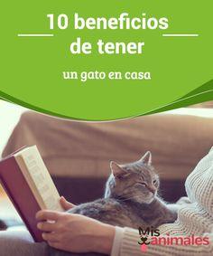 10 #beneficios de tener un gato en casa  Son hermosos, #limpios y no requieren tu atención continua. Estas son sólo algunas de las #razones por las cuales cada vez son más los #amantes de los felinos.