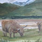 The coos of Lochcarron
