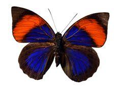 Butterfly by jjd (2008)