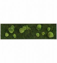 Island Moos, Design, Home Decor, Portion Plate, Hallway Walls, Live Plants, Growing Plants, Gutter Garden, Planting