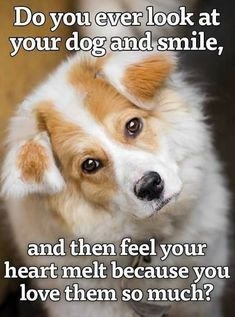 Free Dog Quotes Love Loyalty compassion paw prints a voice Best Dog Quotes, Dog Quotes Love, Dog Lover Gifts, Dog Gifts, Dog Lovers, I Love Dogs, Puppy Love, International Dog Day, Cute Animal Quotes