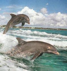 Секс с дельфином анна