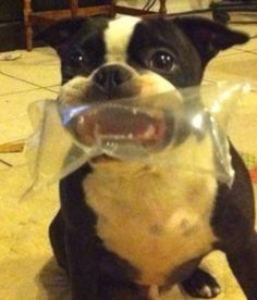 This dog is in the scariest situation for dogs EVER