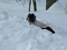 December Snow Storm - 2009