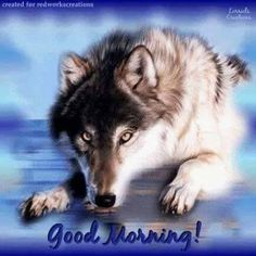 Wolf Spirit, Spirit Animal, Wolf Meme, Dances With Wolves, Wolf Quotes, Wolf Pictures, Big Love, Good Morning Quotes, Big Cats