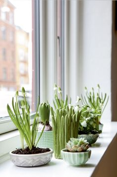 Indoor Garden Made Up Of Succulents And Little Shoots Garden Plants, Indoor Plants, Small Plants, Spring Garden, Home And Garden, Plantas Indoor, Deco Nature, Pot Plante, Deco Floral