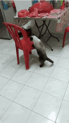 21 Best GIFs Of All Time Of The Week #223