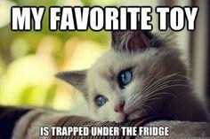 it's always under the fridge...or the sofa.