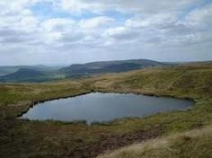 Image result for The roaches