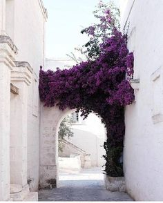 architecture photography exterior Holy this is beautiful Beautiful World, Beautiful Places, Beautiful Flowers, Beautiful Beautiful, Beautiful Pictures, Deco Floral, Floral Arch, Jolie Photo, Adventure Is Out There