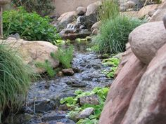 backyard ponds | backyard-ponds
