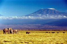 Whether you're climbing Mount Kilimanjaro or just admiring the view from the bottom this is a must-see on your Kenyan or Tanzanian safari. Monte Kilimanjaro, Kilimanjaro Climb, Tanzania, Kenya, Shizuoka, Ottawa, Gaia, Vancouver, Travel Magazines