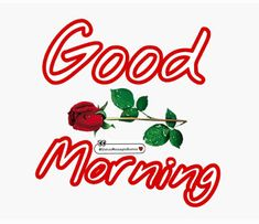 Best Good Morning Status for Love, Friends and Family Funny Good Morning Greetings, Good Morning Wishes Quotes, Good Morning Happy Sunday, Good Morning Image Quotes, Morning Quotes Images, Good Morning Cards, Good Morning Picture, Morning Pictures, Good Night Beautiful