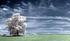 Infrared-photo27 in Beyond Visible: 100 Years Of Infrared Photographs