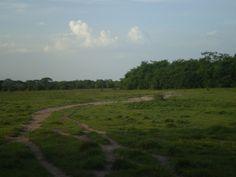 Los Llanos Venezolanos <3