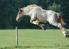 Bye!!!   Why, oh why did I ever teach him to jump!?