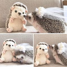 10+ Adorable Hedgehog Pics To Celebrate Hedgehog Day | Bored Panda
