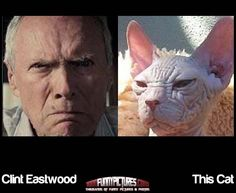 Clint Eastwood And This Cat - Funny Look Alikes