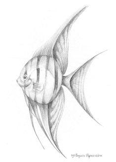 Angel Fish by Bogumiła Pepasińska Fish Sketch, Living Treasures, Angel Fish, Imagines, Drawing Ideas, Tatoos, Give It To Me, Sketches, Deviantart