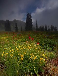 Mount Rainier National Park, photo by Keith Willits
