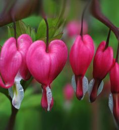 most beautiful flowers - Google Search