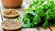 7 pravidel, jak správně pěstovat Koriandr setý (Coriandrum sativum). Recepty, jak využít koriandr v kuchyni. Odrůdy koriandru.Jak a proč koriandr léčí Lemon Coriander Soup, Coriander Leaves, Coriander Seeds, At Home Cleanse, Pho Bo, Small Cabbage, Ayurvedic Herbs, Vegetable Stock, Korn