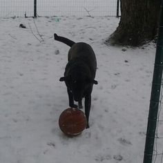 Scooby playing with a basketball