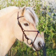 Fjord Horse, Balcony Railing, Horse Tack, Horse Riding, Sticker, Horses, Animals, To Draw, Animales