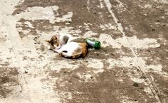 The drunk cat | Flickr - Photo Sharing!