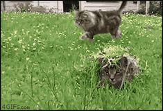 Camouflage master